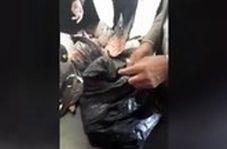 قاچاق مسافری پرندههای بینوا در مرز شلمچه
