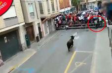 حمله مرگبار گاو به مرد سالخورده در خیابان