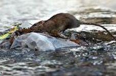 جولان موشها در جوی آب!