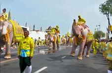 ادای احترام فیلها به پادشاه تایلند