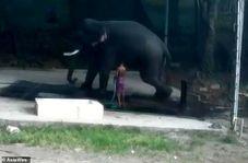 له شدن مرد جوان هندوستانی زیر فیل!