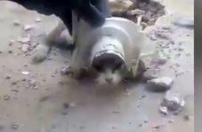 عملیات نجات برای حفظ حیات یک گربه