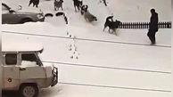حمله وحشتناک ۸ سگ به یک عابر پیاده + فیلم
