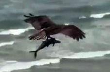 تصویر فوق العاده از شکار ماهی توسط پرنده