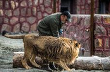 حملهی شیر به مدیر مجموعه دهکده طبیعت در قزوین به خیر گذشت