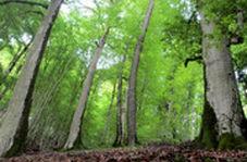 حال جنگلهای ۴۰میلیون ساله مازندران خوب نیست!