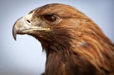 اسلوموشن حیرت انگیز از لحظه پلک زدن عقاب