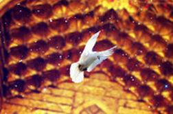 کبوتران حرم الرضا(ع)؛ غرق در صدای نقاره
