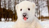 بازیگوشی دیدنی یک توله خرس + فیلم