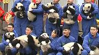 نمایش پانداهای بامزه در چین