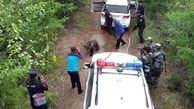 لحظه وحشتناک حمله خرس به ماموران پلیس