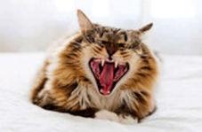 درگیری تماشایی گربه وحشی با مار زنگی در خیابان خلوت!